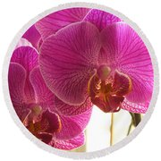 Round Beach Towel featuring the photograph Orchid by Lingfai Leung