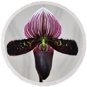 Round Beach Towel featuring the photograph Orchid Paphiopedilum Satchel Paige X Black Beauty by Susan Wiedmann