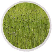 Organic Green Grass Backround Round Beach Towel