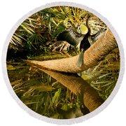 Oriental Darter Anhinga Melanogaster Round Beach Towel