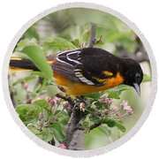 Round Beach Towel featuring the photograph Oriole With Apple Blossoms by William Selander