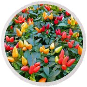Ornamental Peppers Round Beach Towel