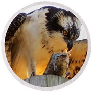 Round Beach Towel featuring the photograph Osprey Breakfast by Dianne Cowen