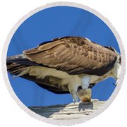 Osprey Eating Lunch Round Beach Towel by Dale Powell