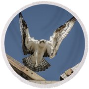 Osprey Landing Round Beach Towel by Dale Powell