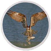 Osprey Morning Catch Round Beach Towel