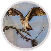 Osprey On The Branch Round Beach Towel