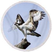 Osprey Pride 6 Round Beach Towel