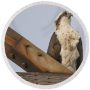 Osprey -seahawk Round Beach Towel by Dale Powell