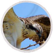 Round Beach Towel featuring the photograph Osprey Youth by Dianne Cowen
