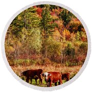 Cow Complaining About Much Round Beach Towel by Jeff Folger