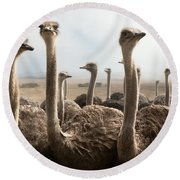 Ostrich Heads Round Beach Towel