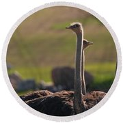 Ostriches Round Beach Towel