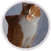 Round Beach Towel featuring the photograph Otis by Christiane Hellner-OBrien