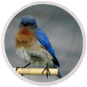 Our Own Mad Bluebird Round Beach Towel