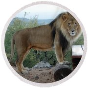 Out Of Africa  Lion 1 Round Beach Towel