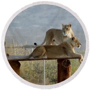 Out Of Africa Lions Round Beach Towel