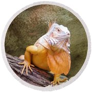 Out Of Africa Orange Lizard 1 Round Beach Towel