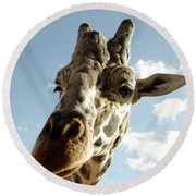 Out Of Africa  Reticulated Giraffe Round Beach Towel