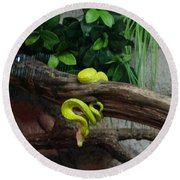 Out Of Africa Tree Snake Round Beach Towel