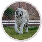Out Of Africa White Tiger Round Beach Towel