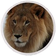 Out Ofafrica  Lion 4 Round Beach Towel