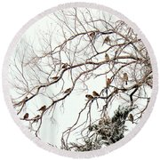 Round Beach Towel featuring the photograph Out On A Limb First Snow by Barbara Chichester