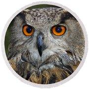 Owl Bubo Bubo Portrait Round Beach Towel