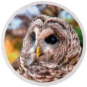 Round Beach Towel featuring the photograph Owl Gaze by Adam Olsen