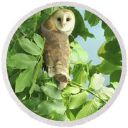 Round Beach Towel featuring the photograph owl by Rod Wiens