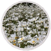 Ox Eye Daisies Round Beach Towel