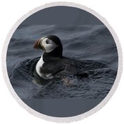 Paddling Puffin Round Beach Towel by Daniel Hebard