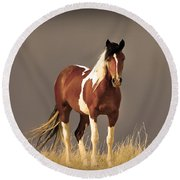 Paint Filly Wild Mustang Sepia Sky Round Beach Towel