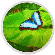 Round Beach Towel featuring the photograph Painted Blue Morpho by Teresa Zieba