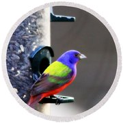 Painted Bunting - Img 9757-002 Round Beach Towel