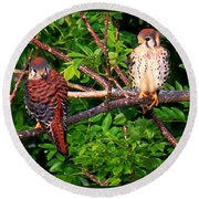 Caribbean Falcons Round Beach Towel