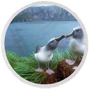 Pair Of Grey-headed Albatross Round Beach Towel