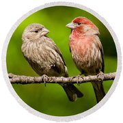 Pair Of House Finches In A Tree Round Beach Towel