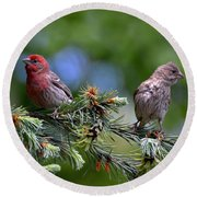 Pair Of Purple Finches Round Beach Towel