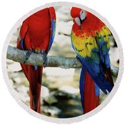 Pair Of Scarlet Macaws On Branch Round Beach Towel