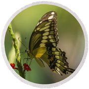 Round Beach Towel featuring the photograph Palamedes Swallowtail by Jane Luxton