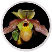 Round Beach Towel featuring the photograph Paphiopedilum 'summer Ice' Orchid by Susan Wiedmann