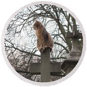Paris Cemetery Cats - Pere La Chaise Cemetery - Wild Cats On Cross Round Beach Towel