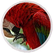 Parrot Preen Hdr Round Beach Towel
