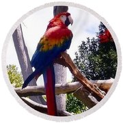 Parrot Round Beach Towel by Susan Garren