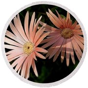 Round Beach Towel featuring the photograph Party Girls by Wallaroo Images