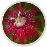 Round Beach Towel featuring the photograph Passion Flower by Jane Luxton