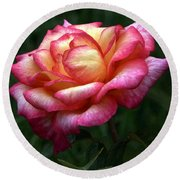 Passionate Shades Of A Perfect Rose Round Beach Towel