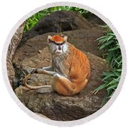 Round Beach Towel featuring the photograph Patas Monkey by Kate Brown