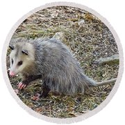 Pawing Possum Round Beach Towel by MTBobbins Photography
